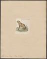 Felis eyra - 1834 - Print - Iconographia Zoologica - Special Collections University of Amsterdam - UBA01 IZ22100328.tif