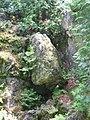 Fern Cavern 2.JPG