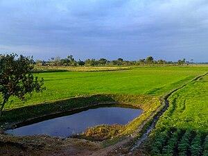 Begowala - Image: Field 1