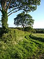 Field boundary by Lodge Lane - geograph.org.uk - 436472.jpg