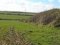 Field boundary near Hendraburnick - geograph.org.uk - 733261.jpg