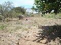 Finca la Ponderosa chaguaramas - panoramio (5).jpg