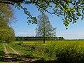 Fischland, Dierhagen18.jpg