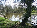 Fishing Pond, Beobridge - geograph.org.uk - 392209.jpg