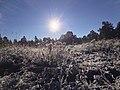 Flagstaff, AZ, USA - panoramio (2).jpg