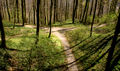 Flickr - Laenulfean - forest crossing.jpg