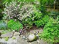 Flickr - brewbooks - Our Garden - May, 2008 (11).jpg