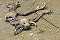 Flickr - ggallice - Sloth mummy.jpg