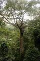 Flight of the Gibbon Chiang Mai.jpg