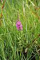 Flora della Sardegna 124 (1).JPG