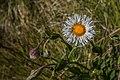 Florescência.jpg