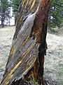 Florissant Fossil Beds National Monument PA272537.jpg