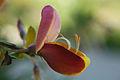 Flower (17653346012).jpg
