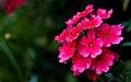 Flower (2710612535).jpg