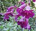Flower (29762593093).jpg