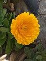 Flower 29 HDR.jpg