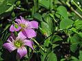 Flowers-107dv.jpg