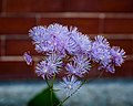 Flowers (19008763076).jpg