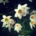 Flowers close-up.jpg