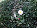 Flowers of lorestan.jpg