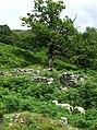 Foel (Ruin) Cwm Doethie, Ceredigion - geograph.org.uk - 511293.jpg