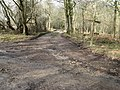 Footpath and bridleway junction in River Common - geograph.org.uk - 1730010.jpg