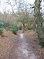 Footpath entering Petty Pool wood - geograph.org.uk - 1773799.jpg
