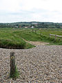 Footpath through Salthouse Marshes Nature Reserve - geograph.org.uk - 826599.jpg