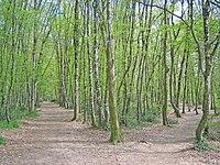Forêt de Bouconne.jpg