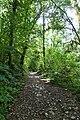 Forest @ Roc de Chère @ Talloires (34836779063).jpg