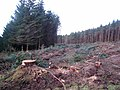 Forest clearing at Thorter Fell - geograph.org.uk - 629257.jpg