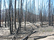 Mountainous region with blackened soil and trees due to a recent fire.
