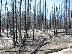 Fjellregion med svart jord og trær på grunn av en nylig brann.