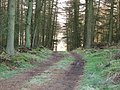 Forest track, Mount Hill - geograph.org.uk - 354892.jpg
