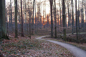 Sonian Forest - Winter sunset in the Sonian Forest.