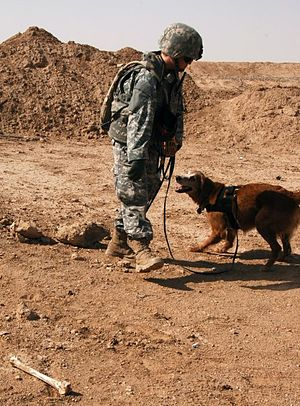 May 2007 abduction of U.S. soldiers in Iraq - A U.S. contractor and her dog search for Specialist Alex Ramon Jimenez, Private First Class John Anzack and Private Byron Wayne Fouty after their abduction