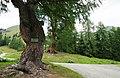 Fragant Landschaftsschutzgebiet, Hohe Tauern, Kärnten.jpg