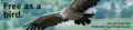 Free as a Bird Banner 2.png