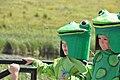 Frogs (6124373086).jpg