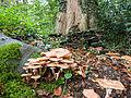 Fungus kingdom (10493546456).jpg