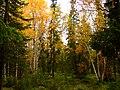 G. Apatity, Murmanskaya oblast', Russia - panoramio (11).jpg