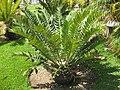 Gardenology-IMG 7903 hunt10aug.jpg