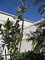 Gardenology.org-IMG 0225 hunt07mar.jpg