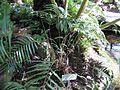 Gardenology.org-IMG 0804 rbgs10dec.jpg