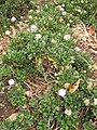 Gardenology.org-IMG 6945 hunt09jun.jpg