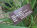 Gardenology.org-IMG 7585 qsbg11mar.jpg