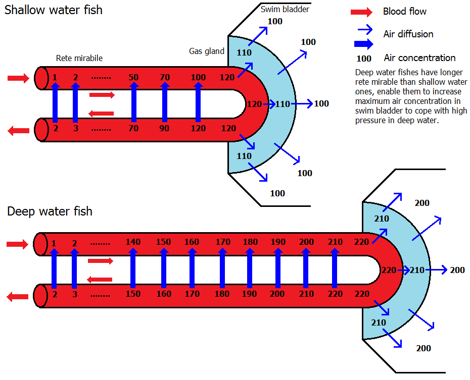GasbladderpumpingEng