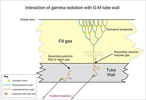 Geiger–Müller tube - Detection of higher energy gamma in a thick-walled tube. Secondary electrons generated in the wall can reach the fill gas to produce avalanches. Multiple avalanches omitted for clarity