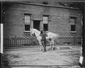 Gen. Joseph Hooker and horse - NARA - 525959.tif