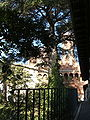 Genova-Castello d'Albertis-DSCF5422.JPG